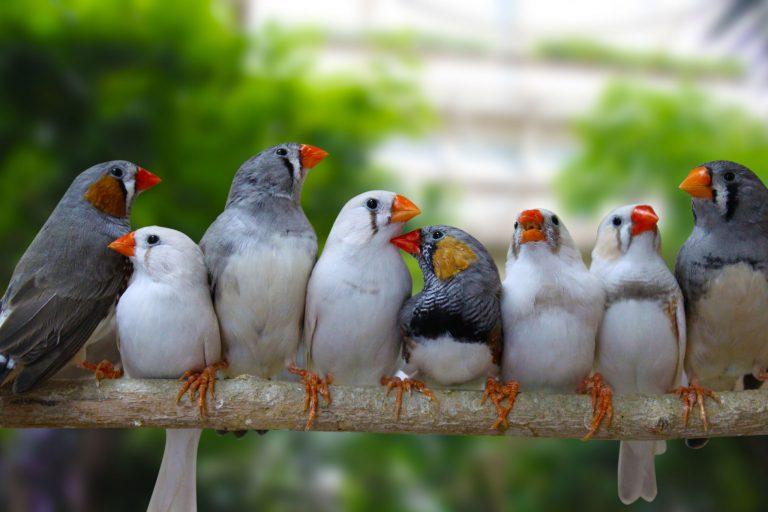 Zwolse vogelmarkt komt er weer aan!